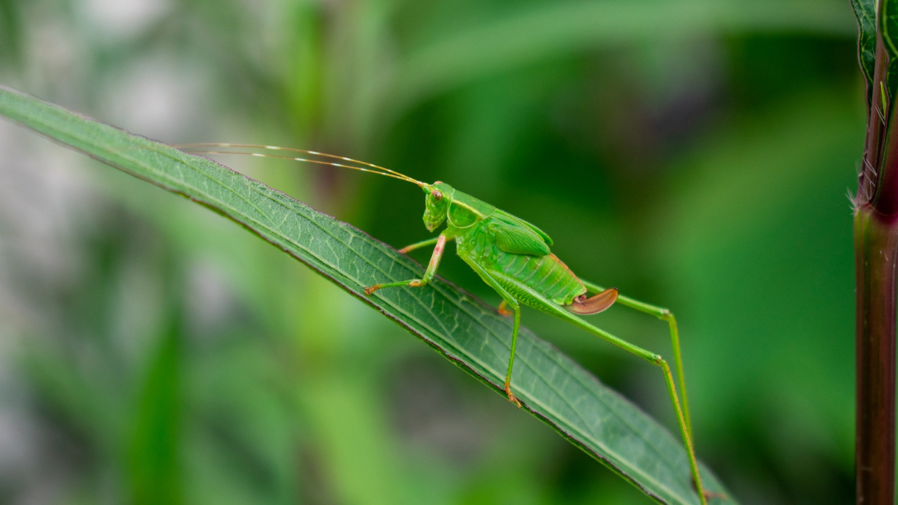 Tips to avoid Crickets on Your Blog