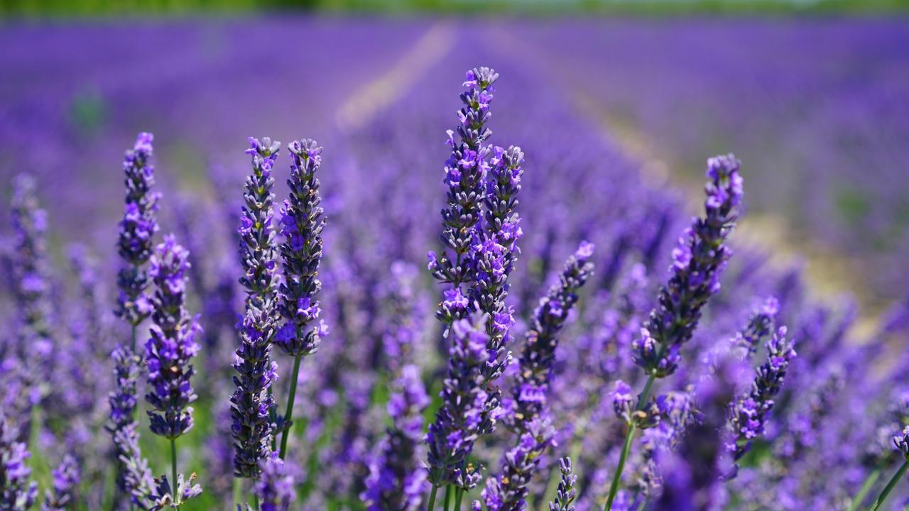 Color Psychology Purple