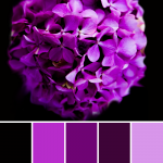 Purple Color Palettes